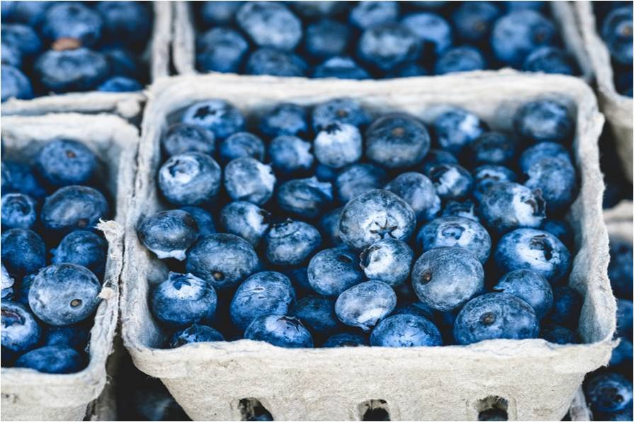 arandanos blueberries Argentina